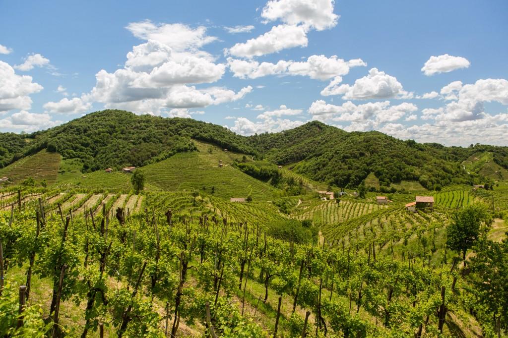 The Prosecco DOCG hills 10 - Photo ©Mattia Mionetto